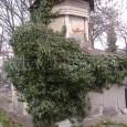 hrobka rodiny Holeschovcov