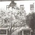 upravený vstup do budovy seminára (rok 1969)