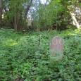 stav cintorína pred začatím brigády