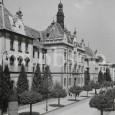 takto vyzerala pôvodná alej guľových javorov na Skuteckého ulici (okolo roku 1925)